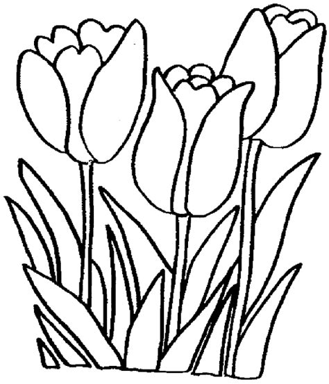 coloring pictures of tulip flowers 301 moved permanently
