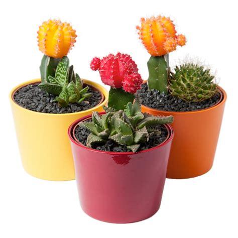 Small cactus garden bg flowers