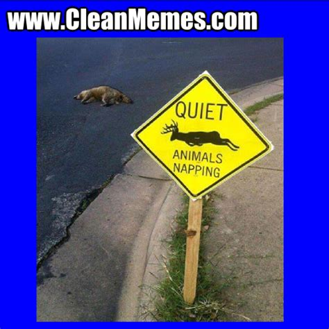 Clean Animal Memes - animal memes clean images