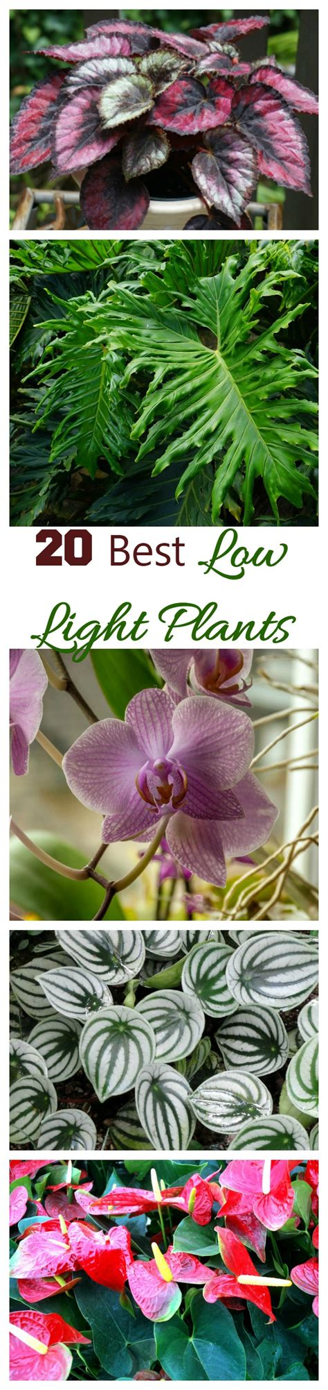best indoor plants low light low light indoor plants my 20 favorite house plants