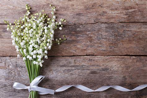 fonds decran muguet de mai bouquets ruban madrier fleurs