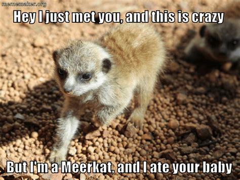 Baby Animal Memes - baby animal memes