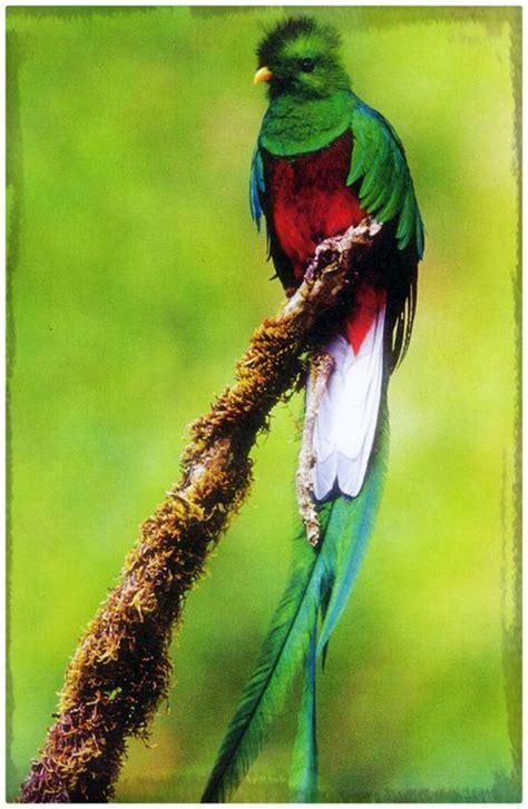 fotos de aves exoticas para imprimir archivos imagenes ver imagenes de aves exoticas del mundo archivos