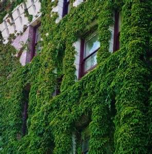 fast growing vines mike s garden top 5 plants