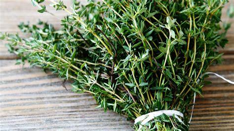 Les Herbes De Provence herbes de provence origine utilisation en cuisine et