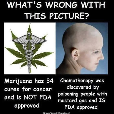 best hemp for cancer does marijuana cure cancer