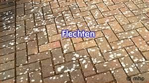 Moos Zwischen Pflastersteinen Beseitigen 6762 by Algen Moos Entfernung Beseitigung Beseitiger Gartenpflege