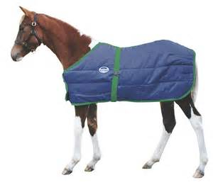 weatherbeeta newborn foal stable blanket