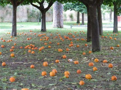 il giardino degli aranci a roma giardino degli aranci family welcome