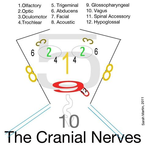 8 Useful Mnemonics by Top 25 Best Cranial Nerves Mnemonic Ideas On