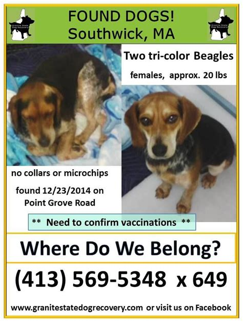 granite state recovery 160 best images about lost and found beagles bassets hounds on beagles