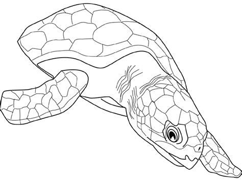 Dessin De Tortue Fr Coloriages Serpent De Mer L