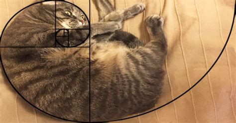 cat sections furbonacci sequence proves that cats are purrfect 10