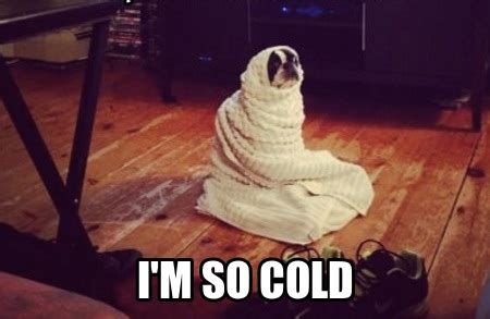Cold Meme - daily occurrences everyone experiences working in an