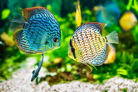 Temperatur Im Aquarium by Temperatur Im Aquarium 187 Passend Zum Fisch Einstellen