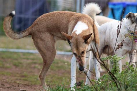 hund ab wann stubenrein wie bekomme ich meinen hund stubenrein 183 snautz de
