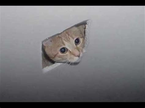Cat Ceiling by Ceiling Cat Somebody S Me