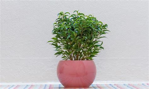 piante da interno purificano l 5 piante purificano l di casa combattono l