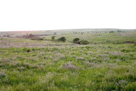 plants in the tropical grassland wiki grassland upcscavenger