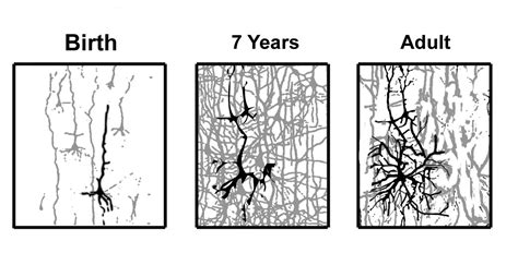 growth in the age of complexity steering your company to innovation productivity and profits in the new era of competition books neurons in chapter 02 human nervous system