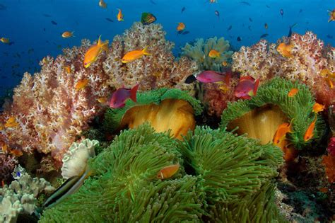 dive fiji fiji diving the best resorts for a