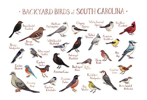 south carolina backyard birds field guide art print