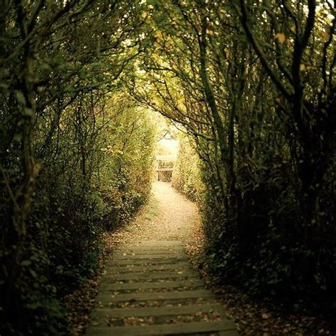 this tree lined path is amazing paths portals caves