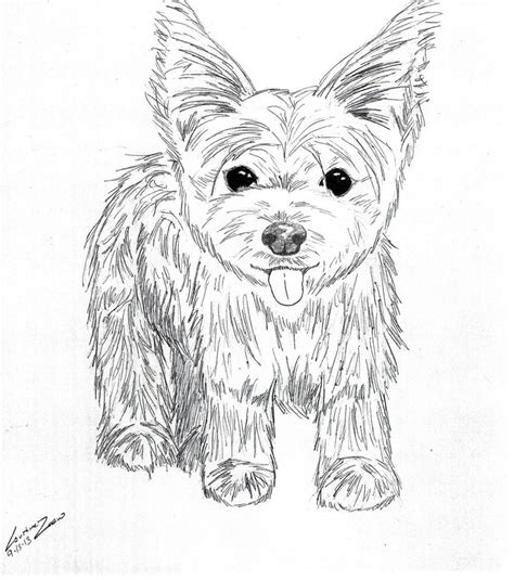 how to a yorkie to outside yorkie print out free coloring pages