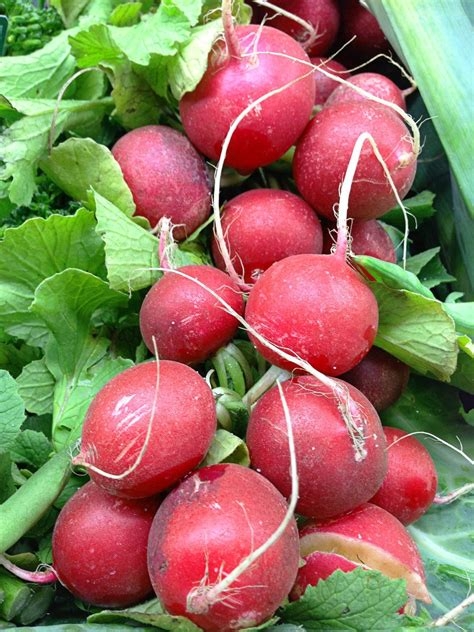 6 vegetables in free fruit and vegetables 6 stock photo freeimages