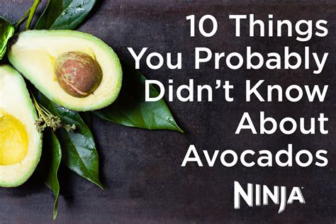 10 secret things you didn 10 things you probably didn t know about avocados ninja