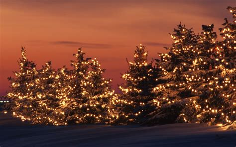 the wild trees in christmas lights on photos from