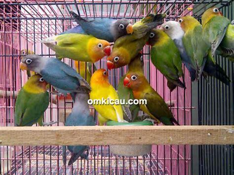 Lu Gantung Di Pasar Kenari harga kenari dan lovebird di pasar kolong kebayoran lama
