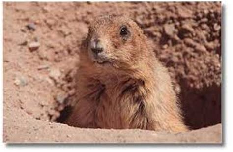 prairie dogs 10 interesting prairie facts my interesting facts
