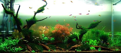 tutorial aquascape tutorial aquascape 28 images tutorial aquascape step