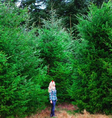 green acres christmas tree farm 22枚の写真 クリスマスツリー