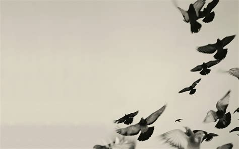 black and white wallpaper with birds bird wallpaper and background 1600x1000 id 242162