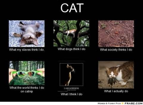 What I Think I Do Meme Generator - cat meme generator what i do