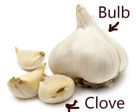 how much is a clove of garlic in recipes quora
