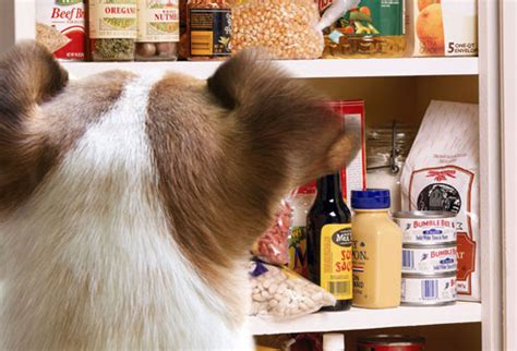 The Puppy Pantry by Toxic And Dangerous Foods Your Should Never Eat