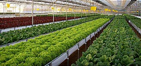 hydroponics systems greenhouse gothic arch greenhouses