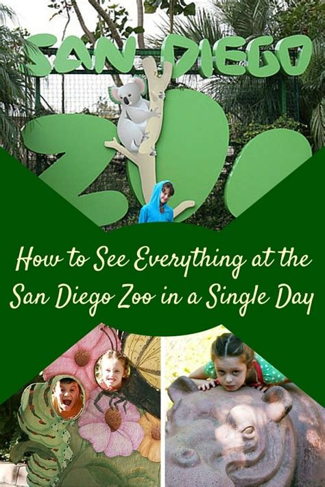 how much are zoo lights tickets 25 best ideas about san diego zoo on san