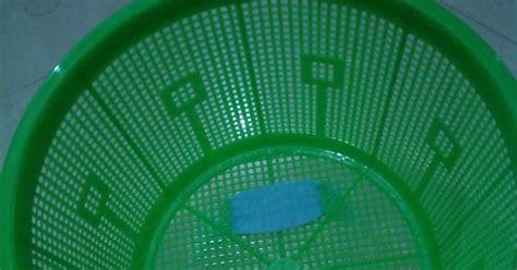 Baskom Plastik No 10 Komet hidroponik sederhana di halaman rumah menanam kangkung dan bayam di baskom atau keranjang cuma