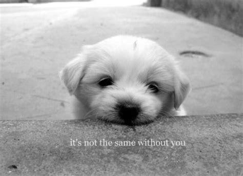 sad puppy love mushy quotes everywhere wave avenue