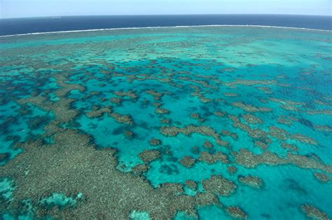 the coral sea coral sea www pixshark com images galleries with a bite