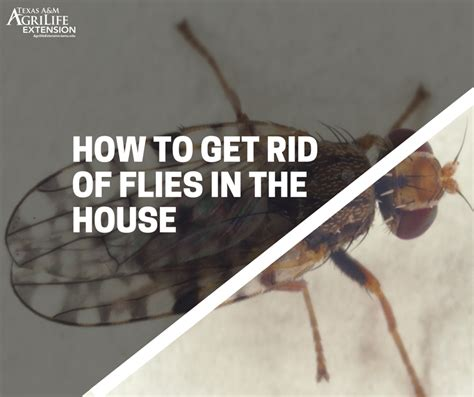 how do i get rid of flies in my backyard how to get rid of flies in your house