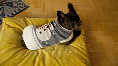 divani cani dalani divani per cani relax a quattro ze