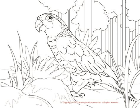 free coloring pages of cockatoo parrots