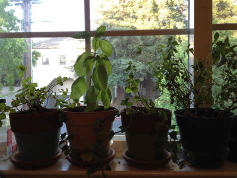 Apartment Herb Garden by 5 Easy Steps To Gardening For Apartment Dwellers Travelnerd