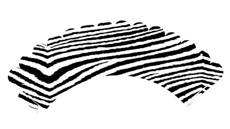 printable zebra cupcake wrappers cathies parties printabe zebra cupcake wrappers