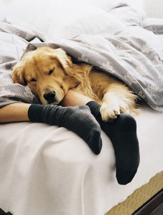 dog sleeping in bed sleeping with pets a good idea or a bad idea